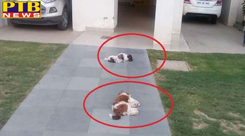 PTB Big Breaking News haryana gurgaon iraqi citizen killed two dogs by throwing from 8th floor