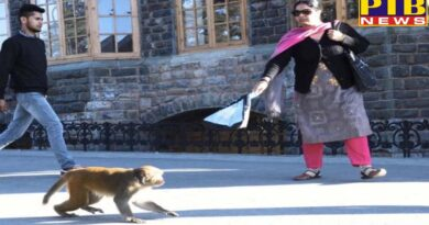 shimla government declared monkeys again vermin in shimla