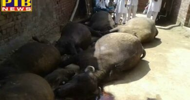 punjab 12 cattle dies roof collapsed in bathinda