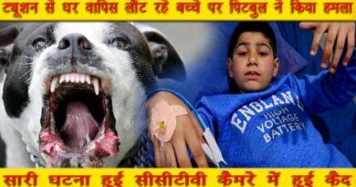 pitbul dog attack child in purian mohalla jalandhar city punjab