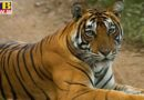 instructions to caution country zoos after tiger found corona infected in New York Zoo