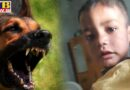 dog kills children in amritsar Village warpal Punjab