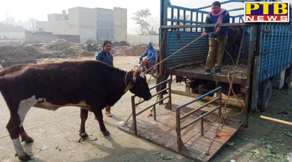 administration started a campaign to help Jalandhar residents get rid of the problem of destitute animals