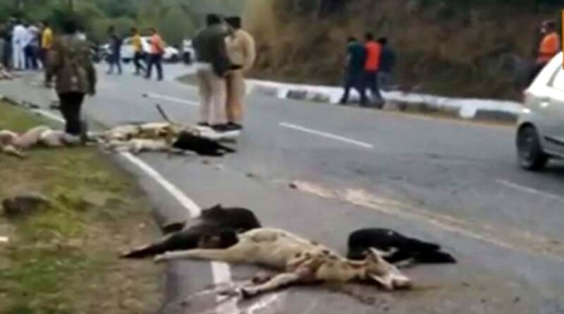 high speed truck crushed 32 sheep tragic accident on ranital lange road Himachal Pradesh Jawali Nagrota Suri HP
